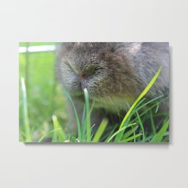 Button Nose; Whiskers Ahoy! Metal Print
