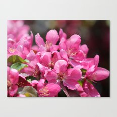 Crabapple Tree named Prairiefire Canvas Print