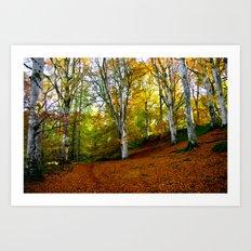 Autumn Trees Woodland Art Print