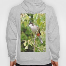Red-Whiskered Bulbul -- 2 Hoody