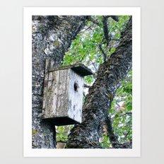 Old bird box Art Print