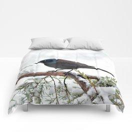 Snow Grackle Comforters