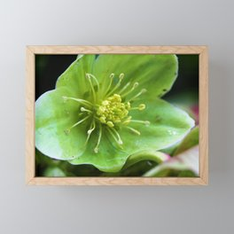 Simplicity in Flower by Reay of Light Photography Framed Mini Art Print