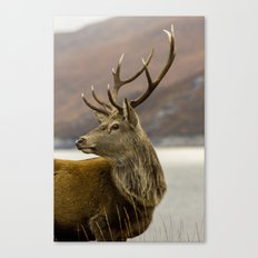 Autumnal Stag Canvas Print