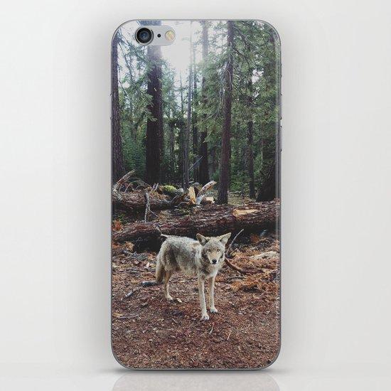 Injured Coyote iPhone & iPod Skin