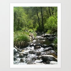 Oak Creek Art Print