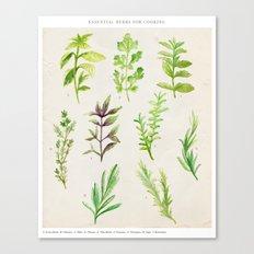 Watercolor Herbs Canvas Print