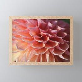 dahlia Framed Mini Art Print