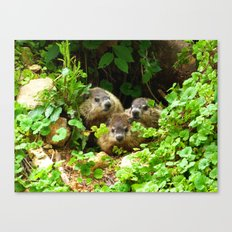 Cuteness Overload Featuring Three Young Groundhogs Canvas Print