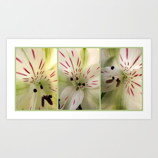 Lily Times Three Art Print