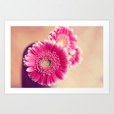 Pink Gerber Daisies  Art Print