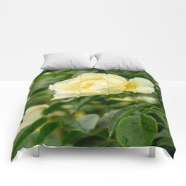 City of York Rose Comforters