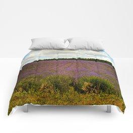 Cotswold Lavender Comforters