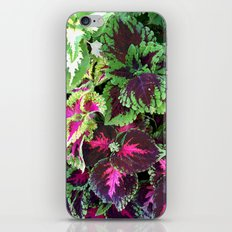 Tropical Forest iPhone & iPod Skin