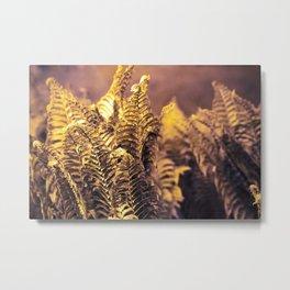 Fern 14 Metal Print