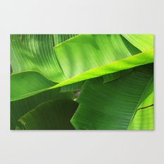 Green|Leaves. Canvas Print