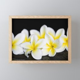 Plumeria obtusa Singapore White Framed Mini Art Print