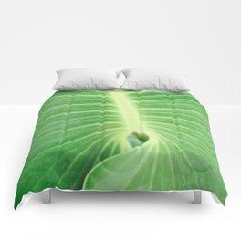 Palm CR Comforters