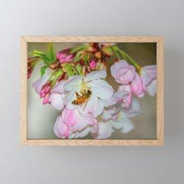 Bee & Cherry Blossoms Framed Mini Art Print