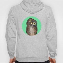 Curios Owl from Animal Society Hoody
