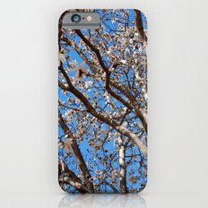 Lying under the white tree tops iPhone 6s Slim Case