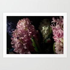 Hyacinth 11 Art Print