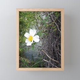 Wild Rose Framed Mini Art Print