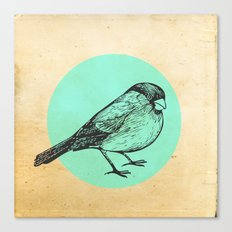 Spotted bird Canvas Print