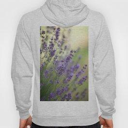 Dream Garden Lavender Hoody