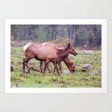 Snoqualmie Valley Elk Art Print