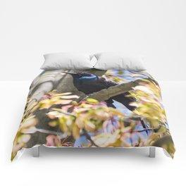 Grackle Comforters