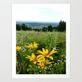 Virginia Flowers Art Print