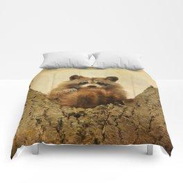 Transfixed Comforters