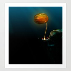 Under Water: Close Up of the