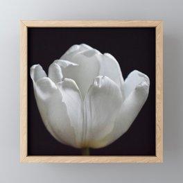 White Tulip On Black Framed Mini Art Print