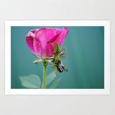 Spider on a Rose Art Print
