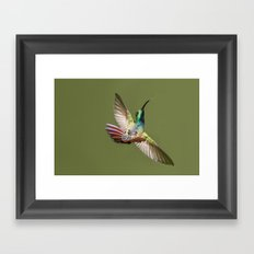 humming bird freeze frame Framed Art Print