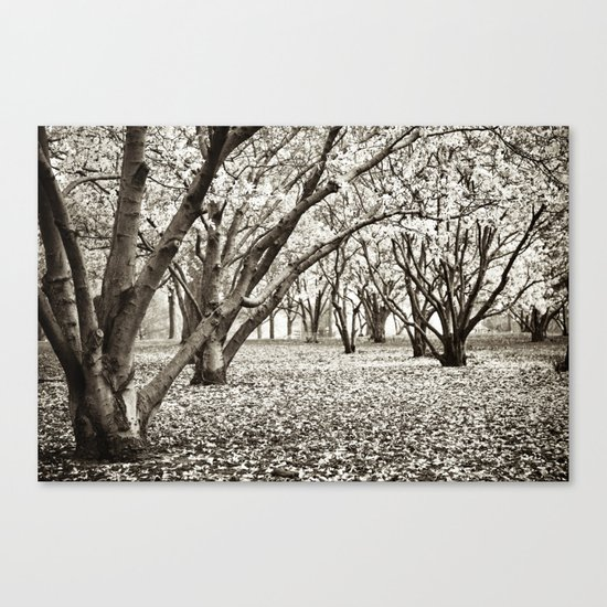 Magnolias in Black & White Canvas Print