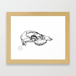 Deer Skull Study Framed Art Print