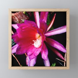 Pink cactus flower Framed Mini Art Print