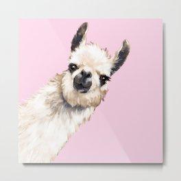 Sneaky Llama in Pink Metal Print