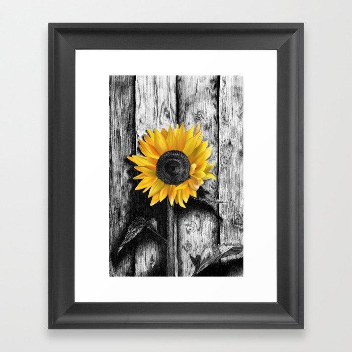 Sunflower Gerahmter Kunstdruck