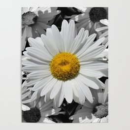Cheerful Daisy Flower A197 Poster