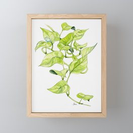 Devils Ivy Illustration Framed Mini Art Print