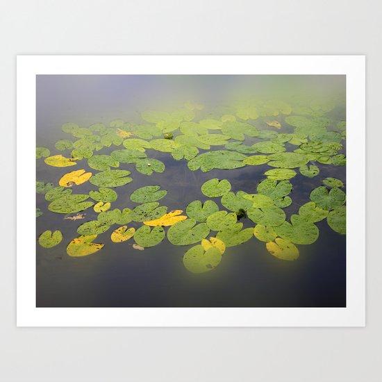 garden pond IV Art Print