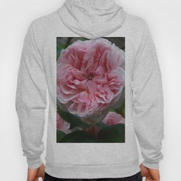 english rose Hoody