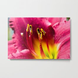 Day Lilly Anther Metal Print