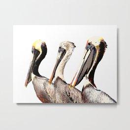 Pelican Metal Print