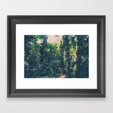 Rainforest, Maui  Framed Art Print