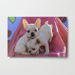 Two Cream Colored French Bulldog Puppies Climbing a Set of Stairs Covered in a Pink Sheet Metal Print
